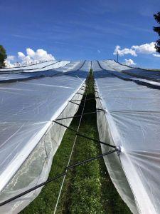Geweven folie (150g/m²) eenzijdig gelamineert breedte 3,0m