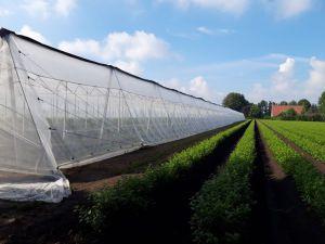 Insecten net 40 mesh wit 4,0m (B)