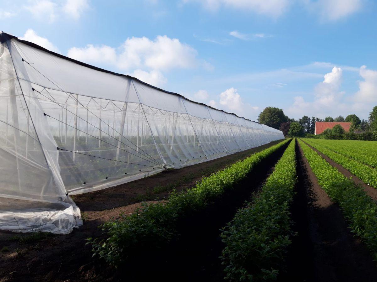 insectnet 40 mesh white 15m w