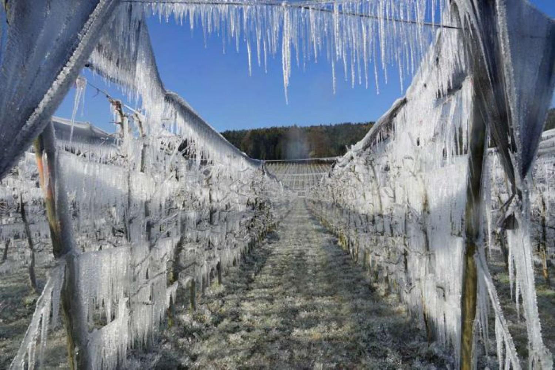 Oostenrijk: ijslaag om de bloesem te sparen