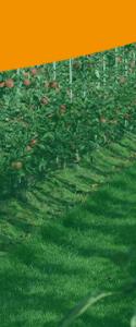 Dé Appeldag 2021 special van FruitSecurity Holland, gouden sponsor.