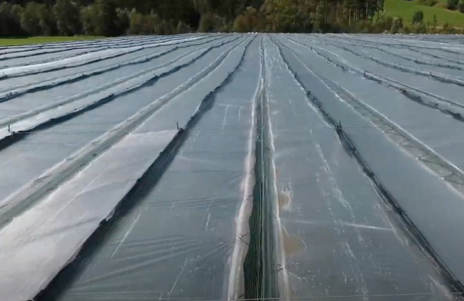 Greenhouse foil and tunnel foil
