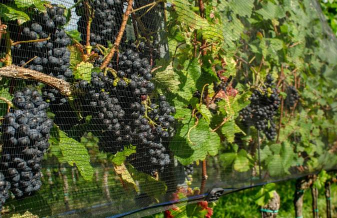Jacket wijngaardsysteem