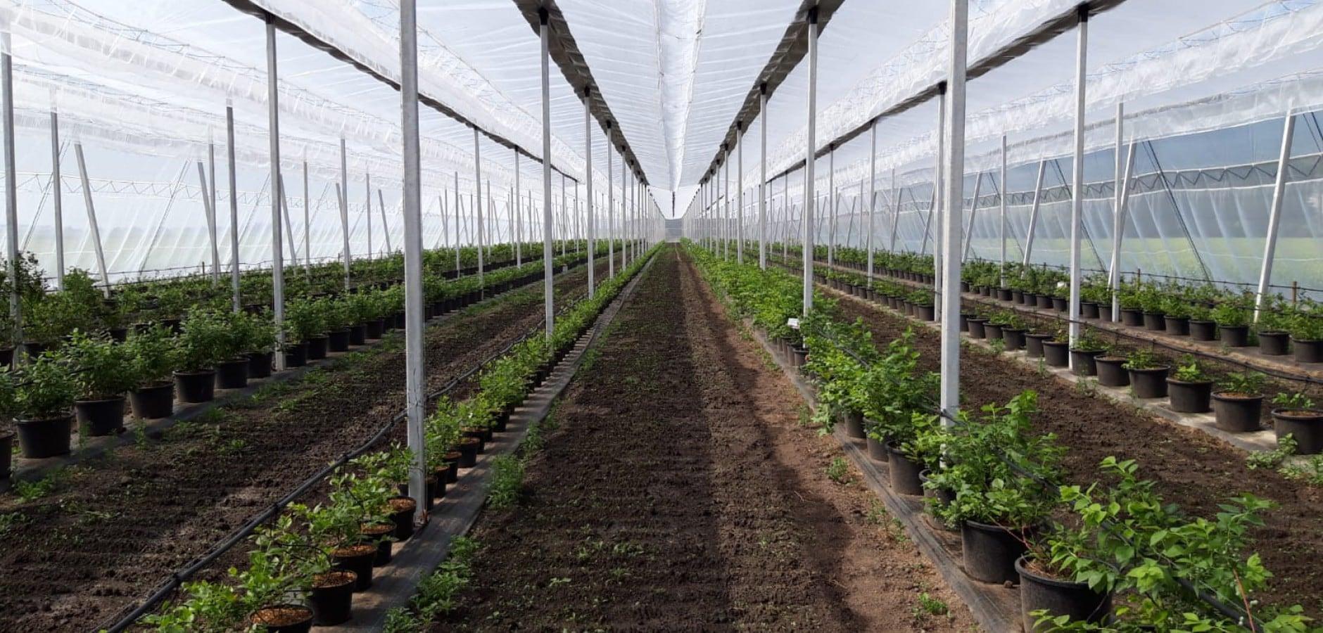 Tunnel and greenhouse foil in Gelderland