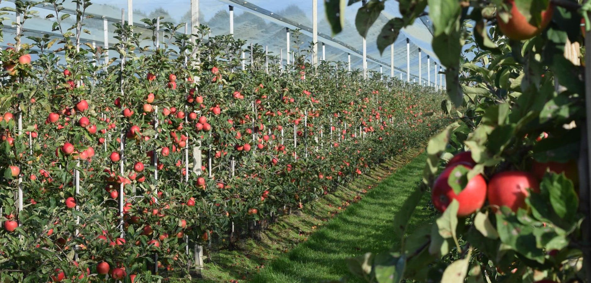 Fruitgrowing