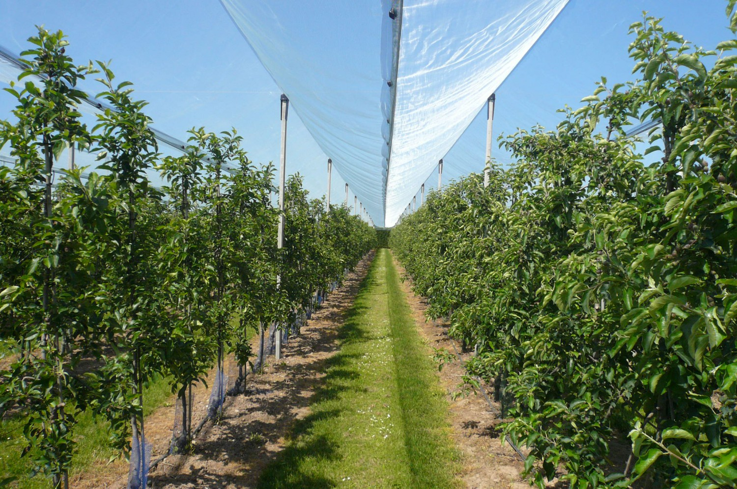 Hail nets for fruit growing