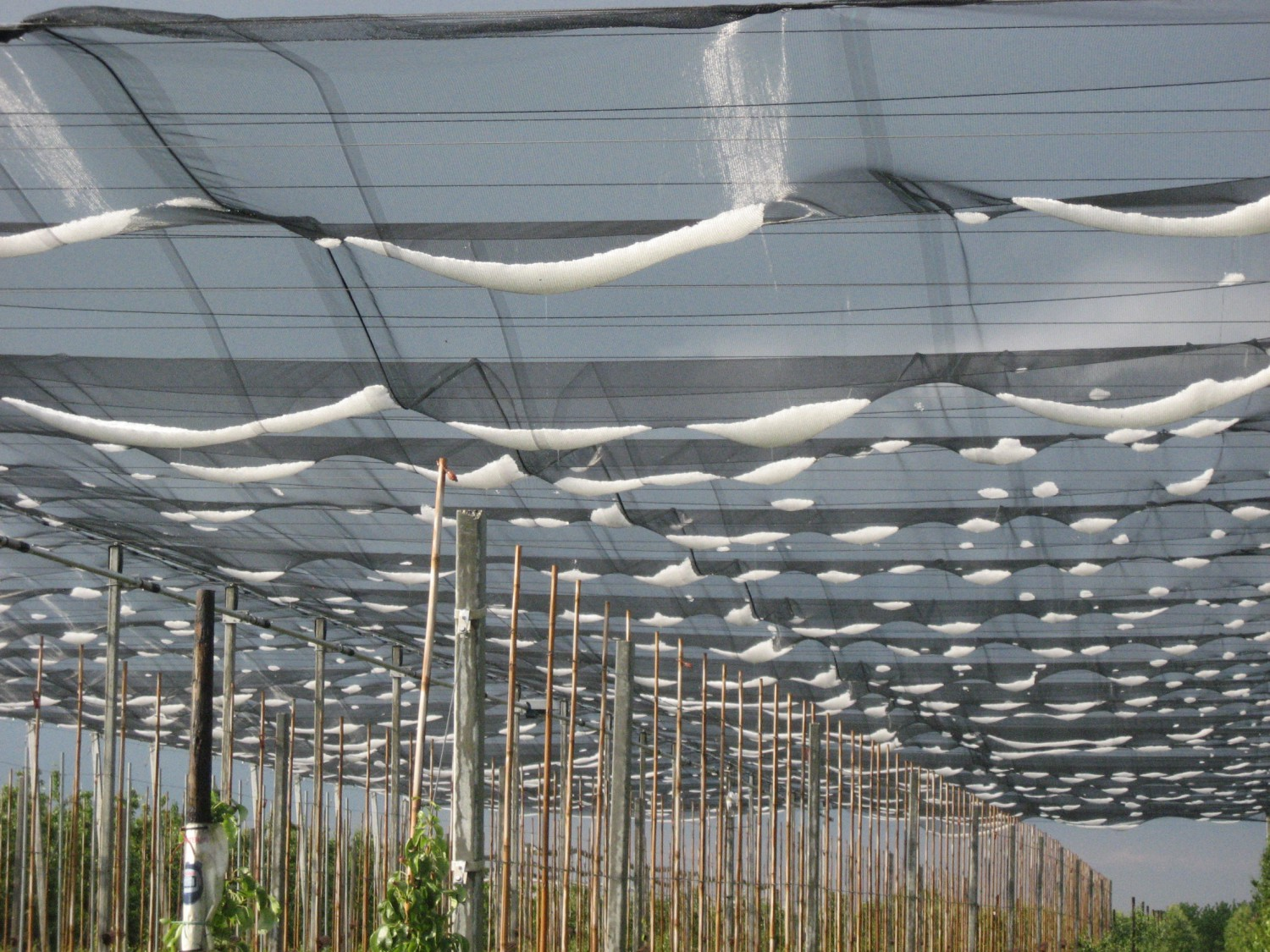 Less sleepless nights for fruit growers through hail nets