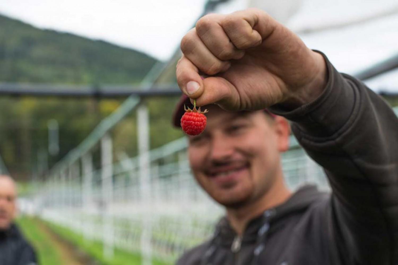 SmileFruit GmbH Raspberries