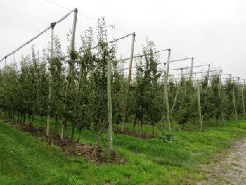 Customer report (1): Kavelaars-Claassen fruit grower