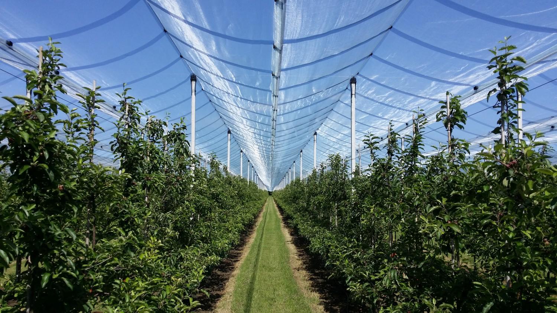 Customer report (3): Bangels fruit farm from Montenaken